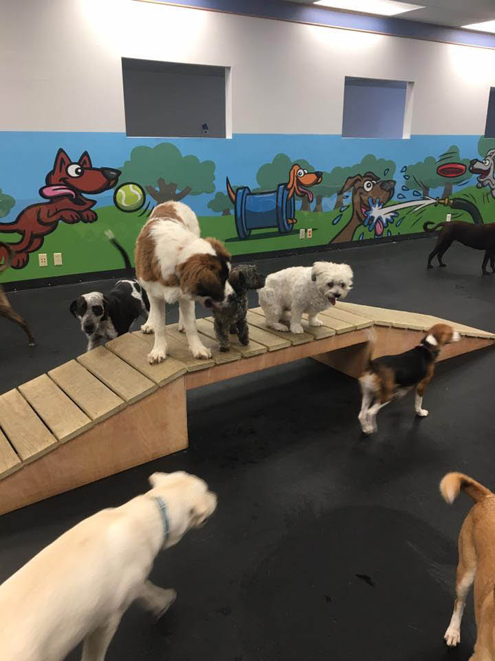 Playtime Dog Daycare Greenfield