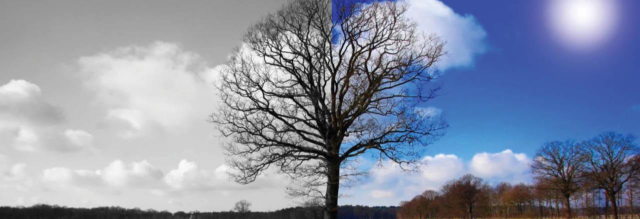 Princeton Tree Care Banner