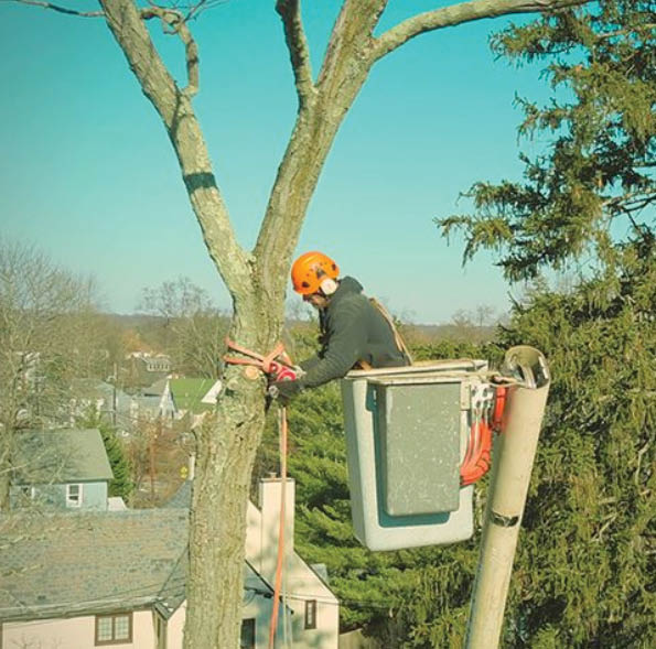 trimming, trees, safety