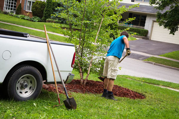 Pro's Mulch and Tree Service mulching
