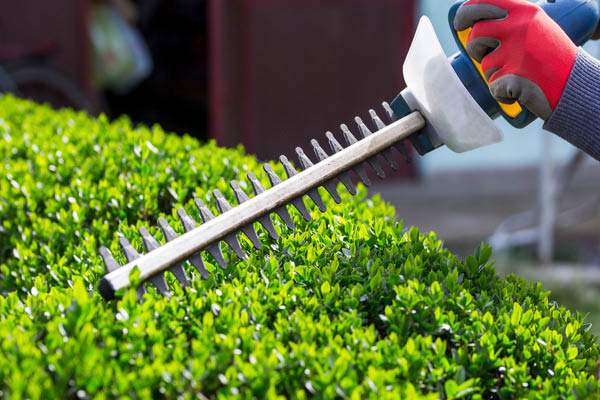 Pro's Mulch and Tree Service pruning