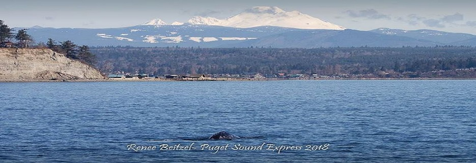 View of beautiful Puget Sound Express on a whale watching tour