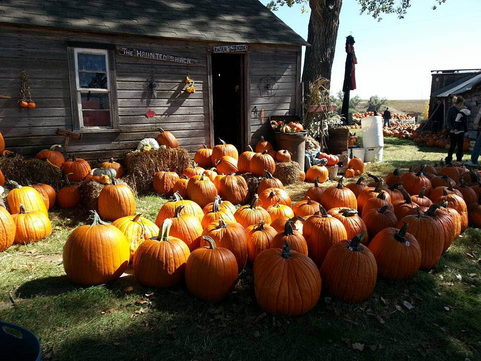 Pumpkin Pickin' Paradise in Milliken