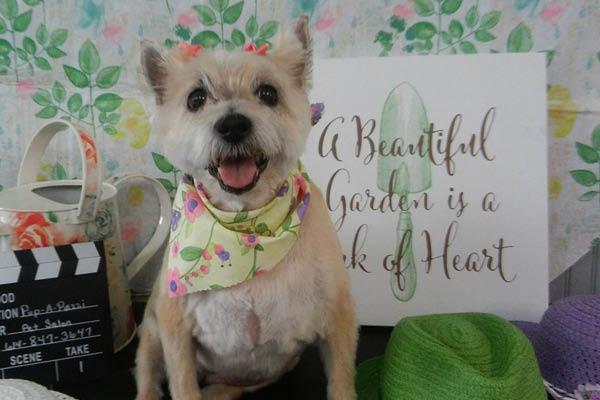 Pup-A-Razzi Pet Salon dog pictures
