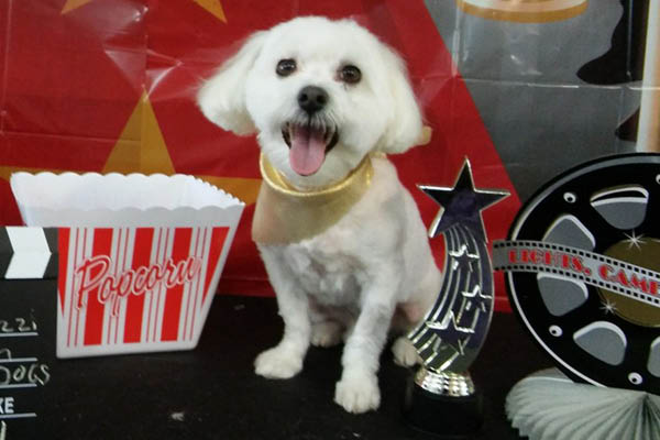 Pup-A-Razzi Pet Salon pet day care