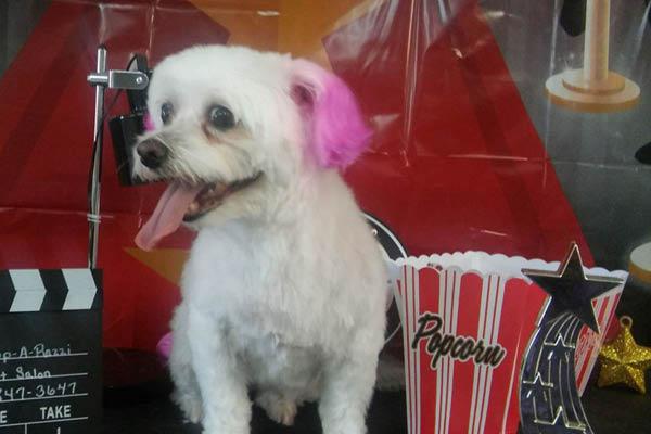 Pup-A-Razzi Pet Salon dog grooming