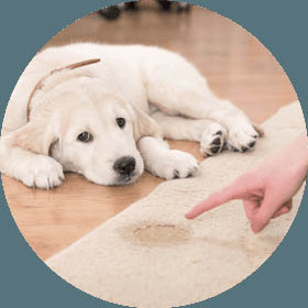 Choose A Guaranteed Carpet Cleaning Inc to complete pet and odor removal from your home. We have over 16 years of experience in providing odor removal services.