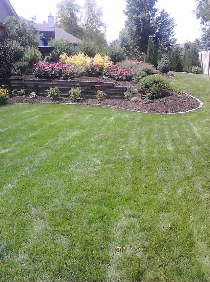 Lawn care and tree service near Omaha