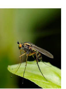 A mosquito bite can be harmful to humans - we offer pest control to Dutchess County, NY