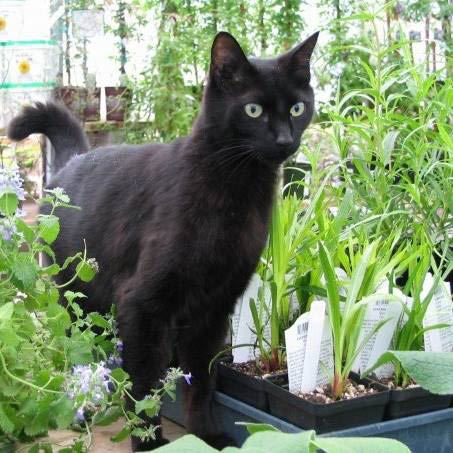 Black cat in the plants