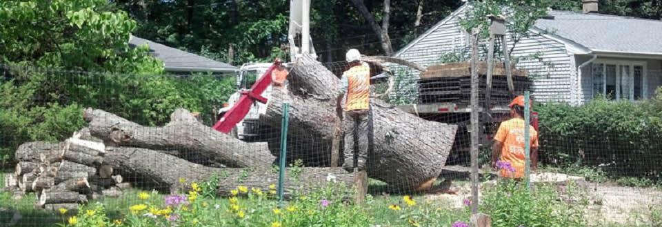 Rod's Tree Service in Morris County NJ