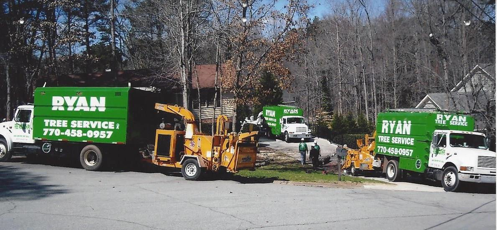 Atlanta arborists; tree removal; stump removal