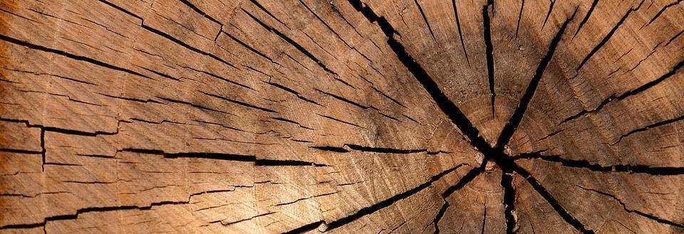 Scott's Tree & Stump Removal banner Erie, PA