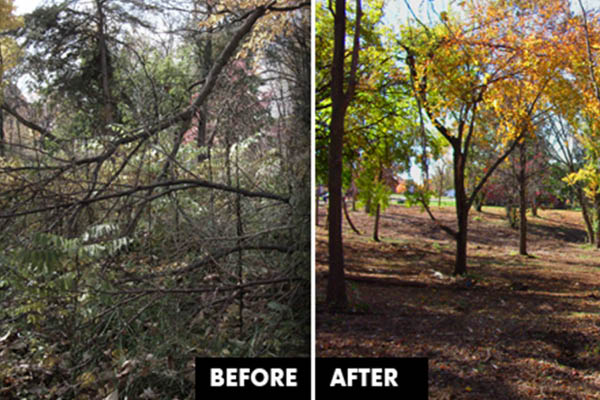 Scotts Tree Service clear cut and land clean up.