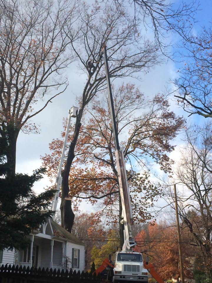 tree removal erie pa