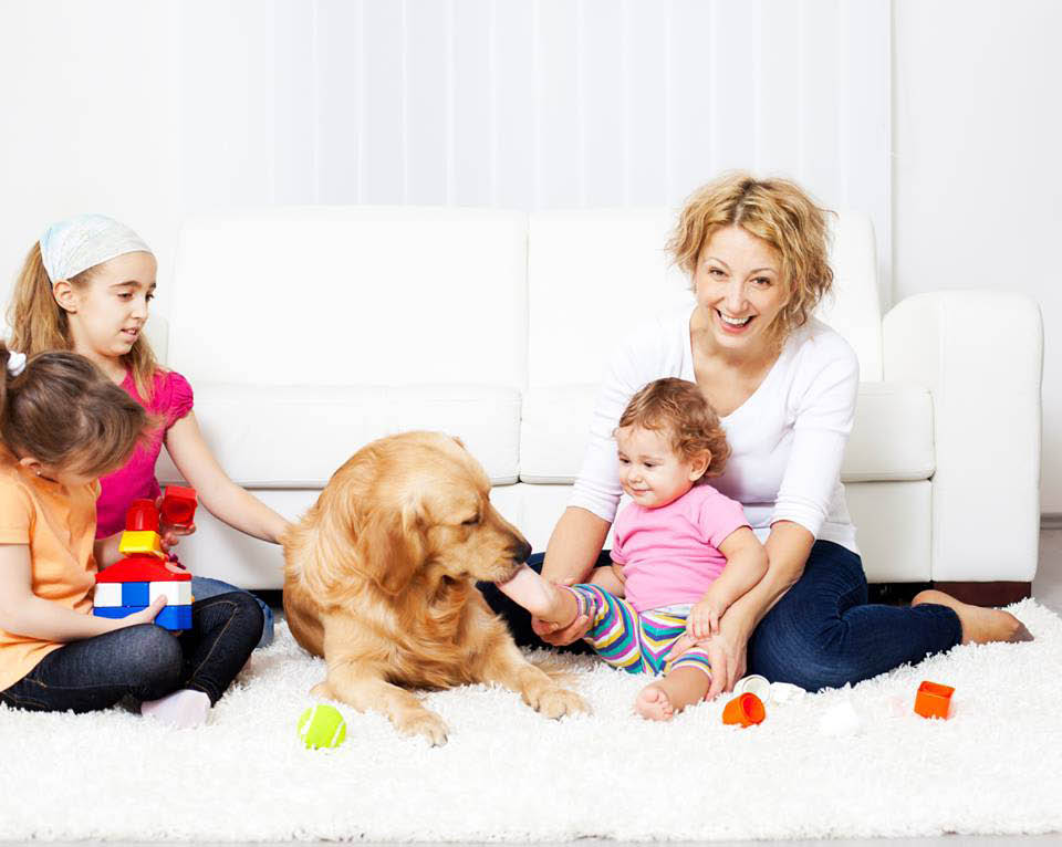 Carpet Cleaning in Des Moines, Iowa