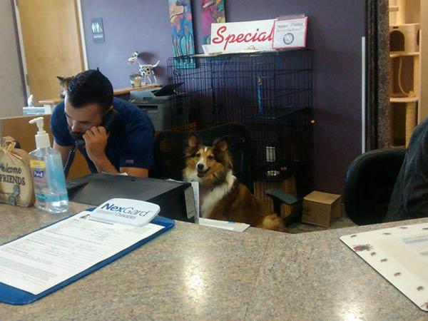 Animal Hospital of Shawnee Hills friendly staff