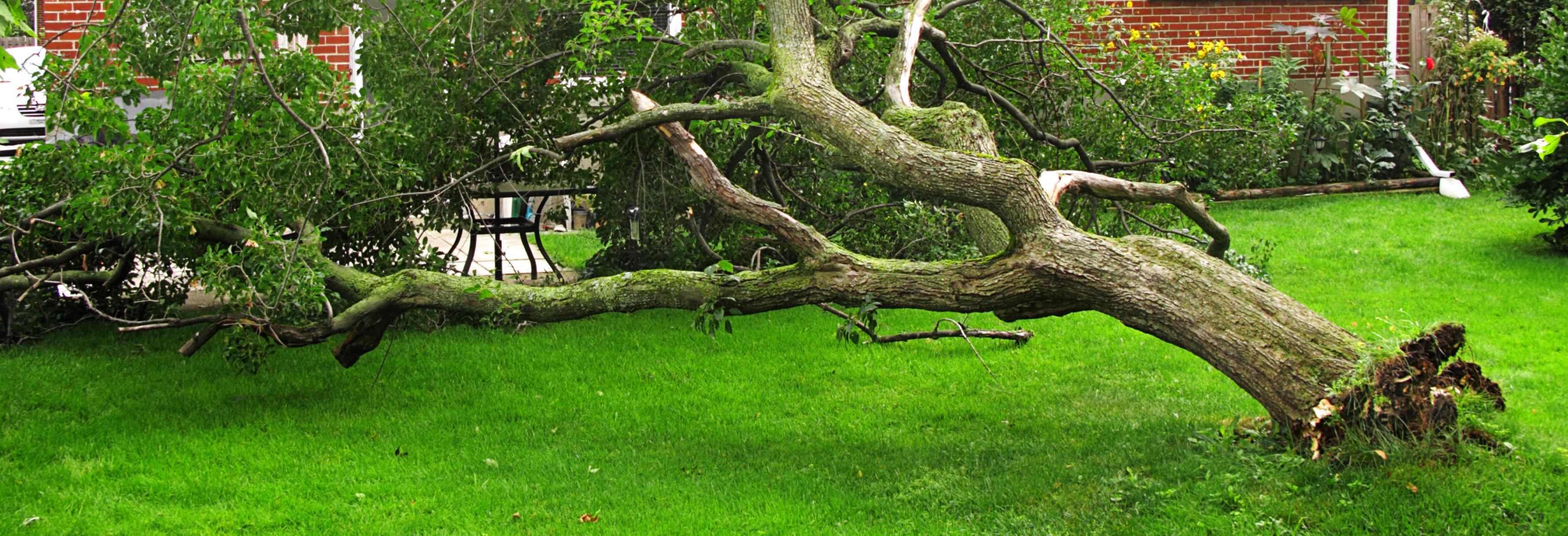 allied tree service broken tree fallen tree