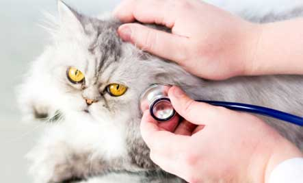 PetCura Animal Hospital of Livermore, CA; sick cat; veterinarian for cats