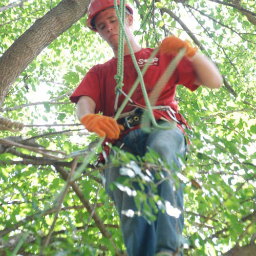 Tree trimmer at Smitty's Tree Service.