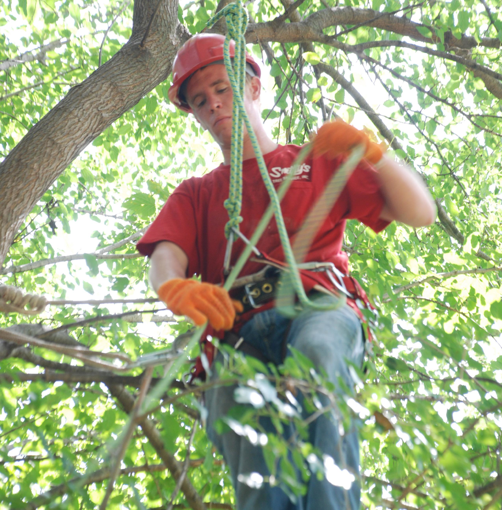 Smitty's arborist will check your tree health.