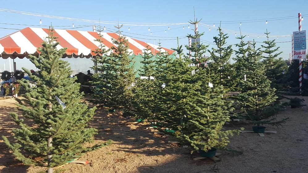 christmas tree coupons near me