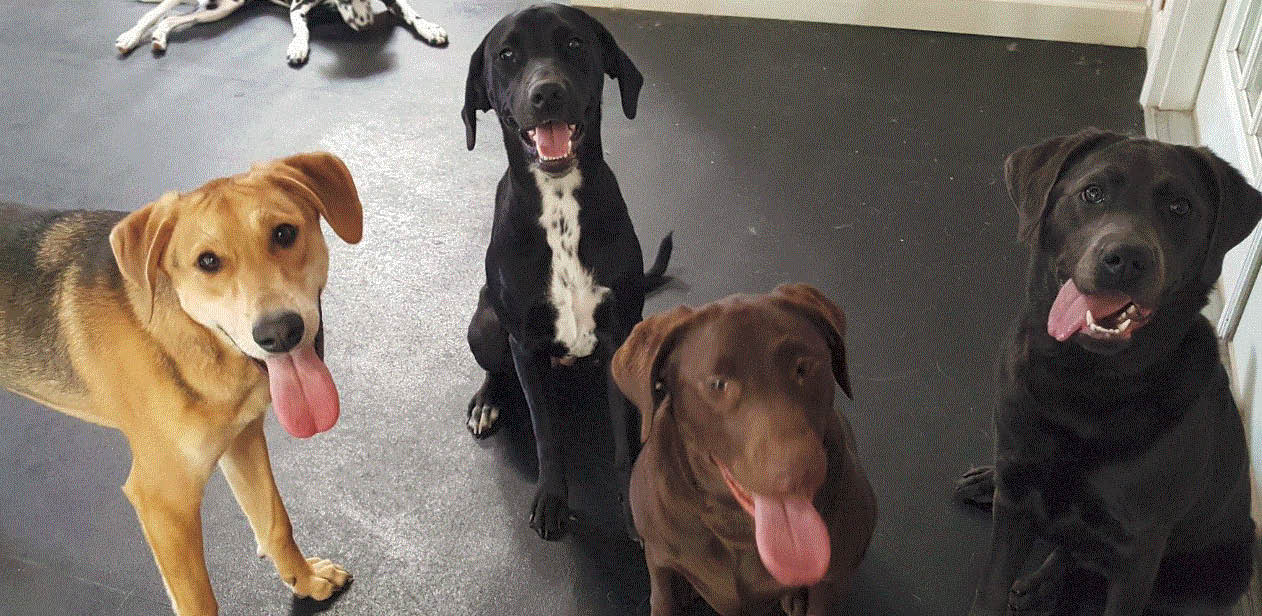 Pictures of the dogs at Splish Splash Doggy Daycare & Spa in St. Clair Shores, MI