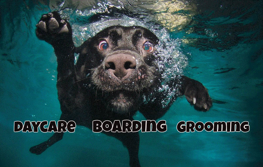 Picture of dog swimming at Doggy Daycare & Spa in St. Clair Shores, MI