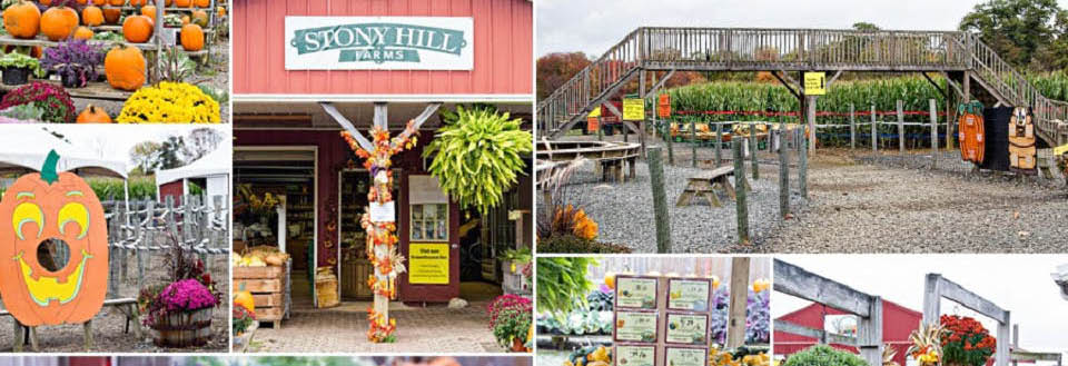 Stony Hill Farms in Chester NJ