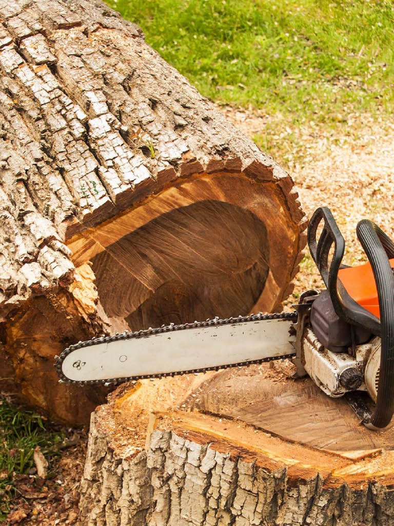 tree stump removal. very important service. prevent the downing home destruction