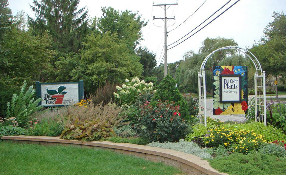 Buy annual flowers near Downers Grove
