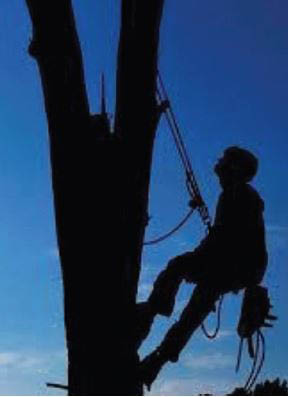 Thomas Tree Service near me tree removal stump removal tree trimming pruning lot clearing bucket truck service