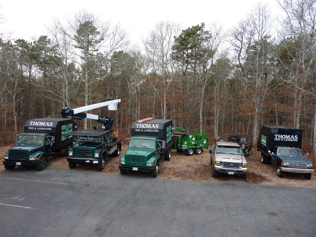 Quality tree & landscape services on Cape Cod MA