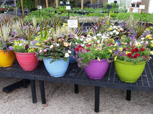 Thorsen's Greenhouse potted plants