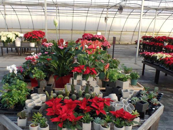 Thorsen's Greenhouse plants