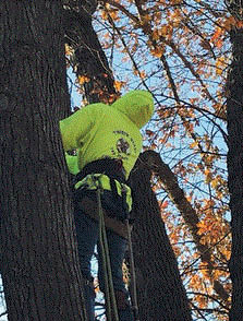 Picture of Tree Trimming Specialist at Timber Beast Tree Service in Oxford, MI