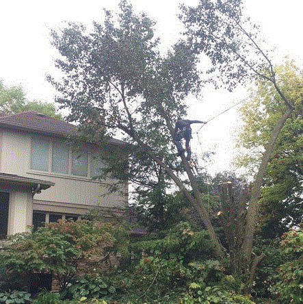 Picture of home with tree hanging over roof at Timber Beast Tree Service in Oxford, MI