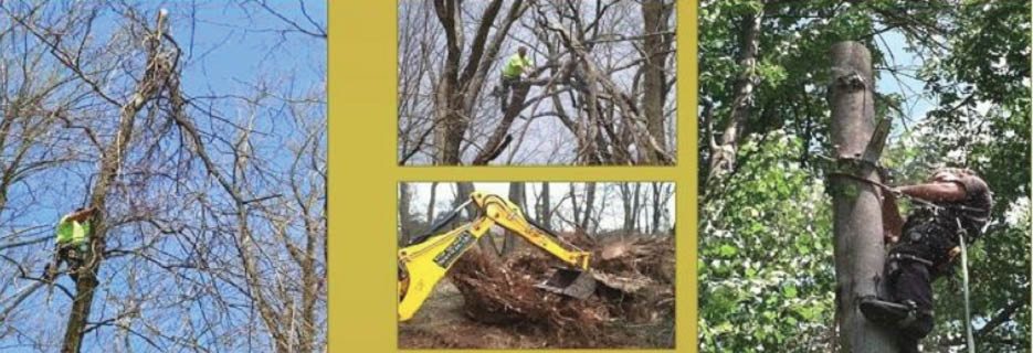 Top Quality Tree Service of Central Jersey