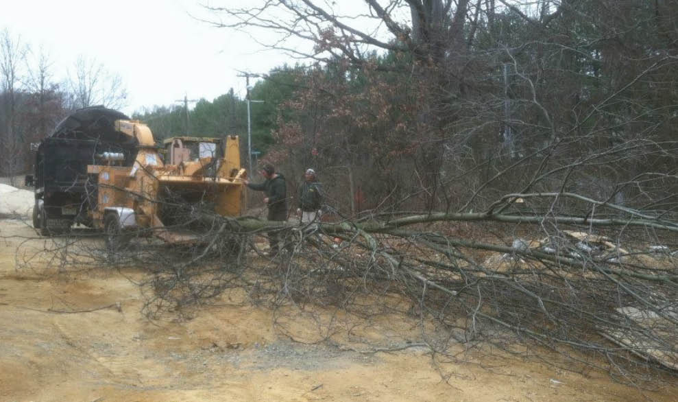 trees, tree removal, tree trimming
