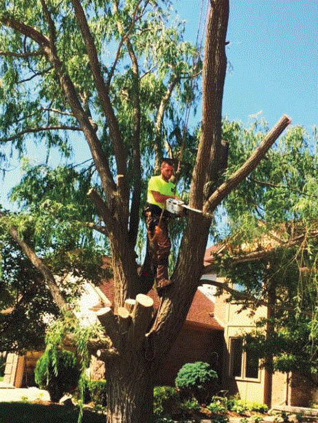 Lot clearing with Top Tree Care in Waterford, MI