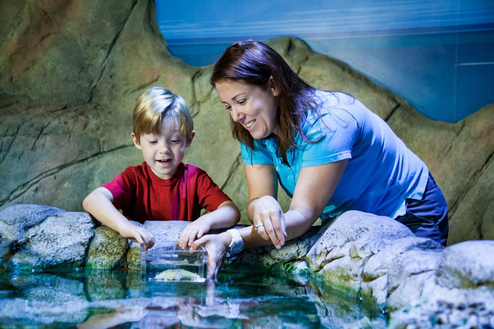 Sea Life Arizona In Tempe Az Local Coupons October 14 2018