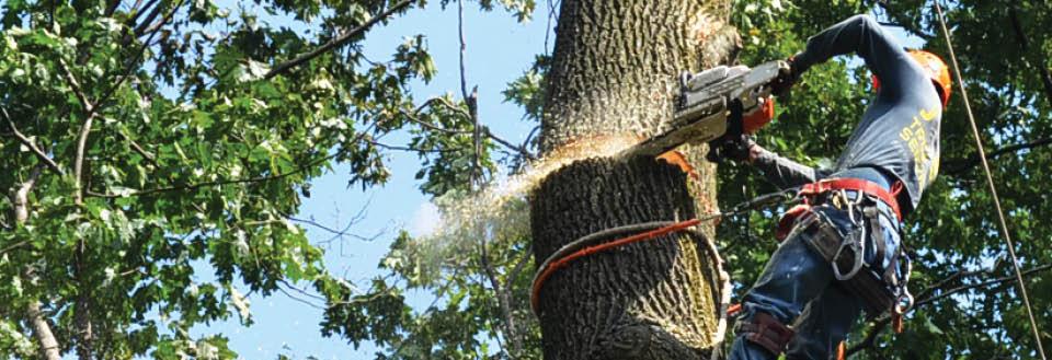 ballard tree service banner