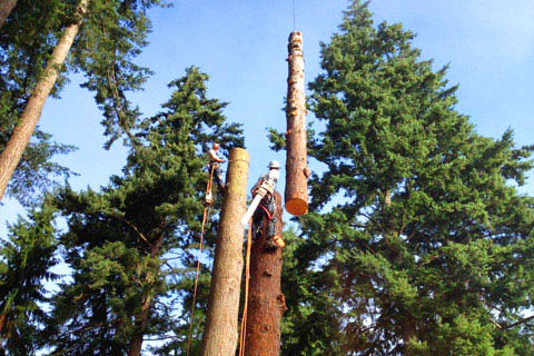 Tree contractor Whatcom County