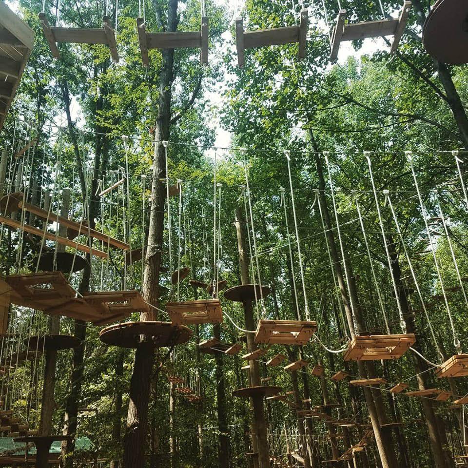 tree top adventures