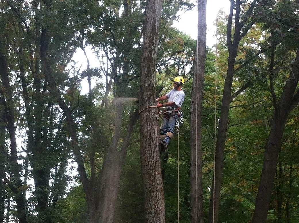 Tree removal performed by Tree Chief Specialists in Dover NJ