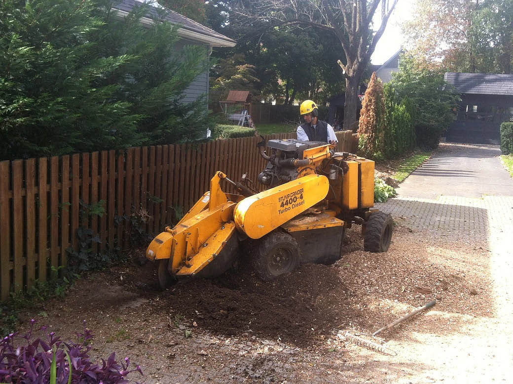 Stump grinding by Tree Chief Specialists in Dover NJ