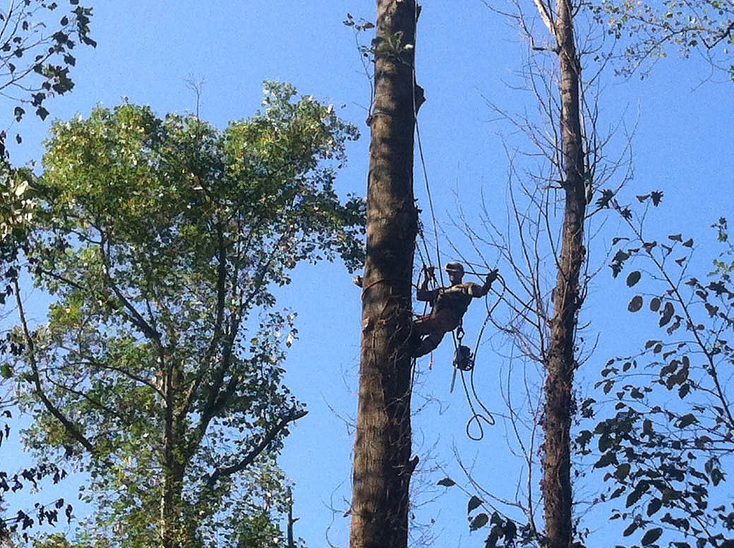More tree removal from Tree Chief Specialists in Dover NJ