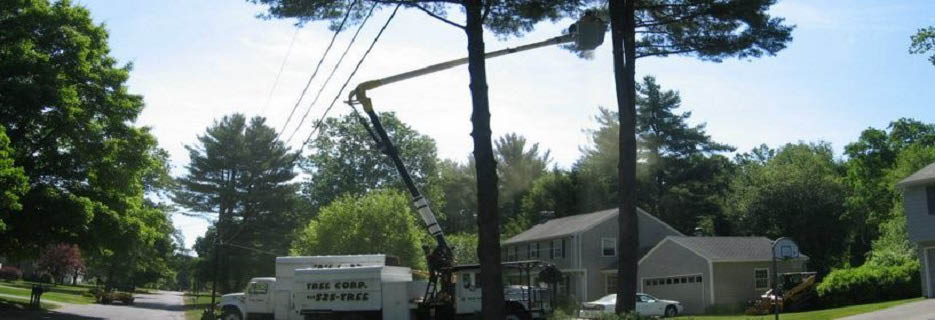Tree Corp. in Western MA & Northwest CT banner