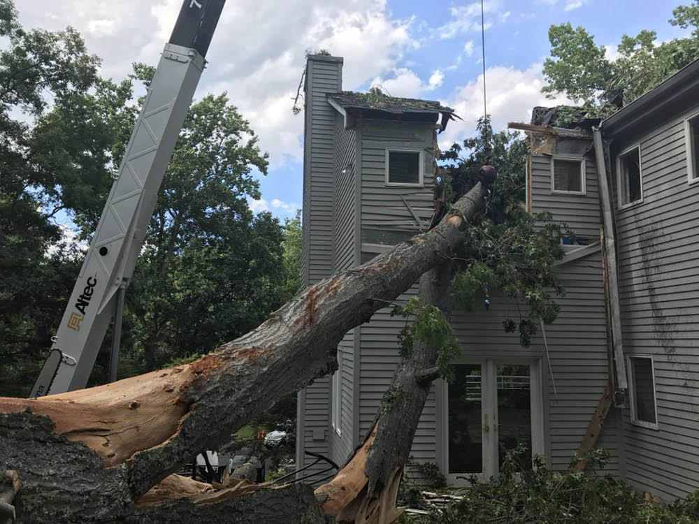 Emergency Tree Service, Tree Removal, Tree Pruning, Stump Removal, Tree Care & Fertilization, Mulch Supply, Crane Rental, Snow Plowing, Landscaping & Planting, Price Ranges for removals; northern va area and surrounding