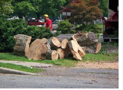 Stump grinding from Tree King in Landing NJ